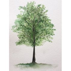 Copyright by Adriana Galindo - Árvore n. 40, Tree 40, Poiters/França, #40treesprojet 40treesprojetct, aquarela , watercolor, aquarelle, france, frança, ilustracao, illustration, pintura, painting, illustration, decoracao, decor, plein air, observacao, natureza, nature, adriangagalindo, drigalindo, copyright by Adriana Galindo