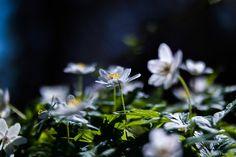 https://flic.kr/p/EZnYCq | Tavasz...én így szeretlek! | Zemplén hegység kincsei...