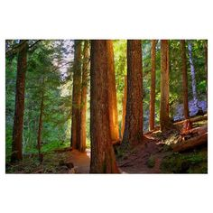 Oregon Woods photo, HDR photograph, Orange, green, brown, 8 x 10 fine... (53 BRL) ❤ liked on Polyvore featuring backgrounds, pictures, forest and scenery