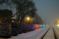 University Avenue, Madison, Jack Kammer's Christmas lights