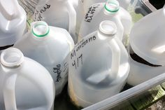 """The Green Phone Booth: How Empty Milk Jugs Changed My Garden"""