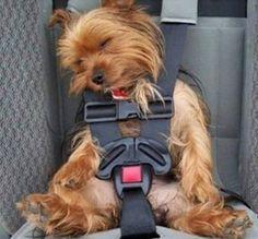 犬の寝落ち姿も相当な破壊力を持っていた。思わず画面を触ってみたくなる犬の寝相画像特集