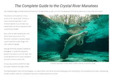 The intro page to the Complete Guide to the Manatees of the Crystal River.  If you are interested in the unique and incredibly photogenic creature that is the Florida Manatee. And if you are thinking of going to the Crystal River to photograph them, check out my guide as it documents everything I learned for my two trips there!