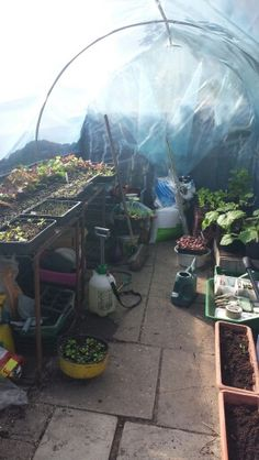 Inside the greenhouse - end of June 2015