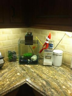 Elf on the Shelf Fishing for real goldfish this time.
