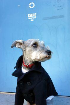 気が早いのですが、来年のカレンダーの話。 「犬めくり」 の1枚にアインの写真を採用していただきました。 お気にいりのPコートを...
