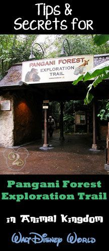 After you ride the Kilimanjaro Safaris, head over to the Pangani Forest Exploration Trail. Here you can see Gorillas and other animals native to Africa.