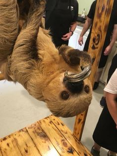 Two Toed Sloth, Sloths, Bread, Food, Brot, Essen, Baking, Meals, Breads