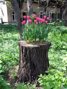 """Tulip bulbs planted in the hollow of a tree stump. """"I think this page is in Russian, but there are a number of nifty garden art photos here"""". Recycled Garden, Diy Garden, Garden Projects, Garden Art, Garden Design, Spring Garden, Tree Garden, Garden Kids, Garden Oasis"""
