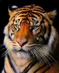 Akron zoo. Nikon D300