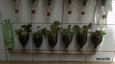 Awesome DIY: Build A Self-watering Bottle Garden. - BRILLIANT DIY Self Watering Bottle, Self Watering Pots, Bottle Garden, Plant Hanger, Trays, Things To Come, Gardens, Awesome, Plants