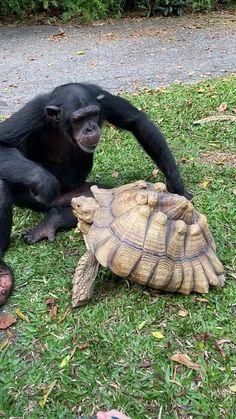 Cute Wild Animals, Cute Little Animals, Cute Funny Animals, Animals Beautiful, Funny Looking Animals, Baby Animals Super Cute, Cute Animal Videos, Funny Animal Pictures, Funniest Animal Videos