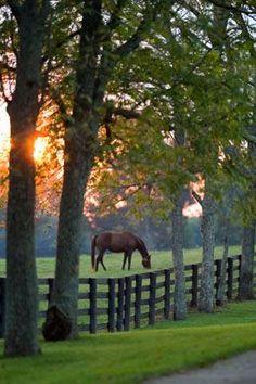 Udnyt de marker som i forvejen haves. Tilbyd heste/dyrepension (agistment) eller sommergræsning.