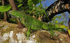 Rio Platano Biosphere Reserve, Guinea