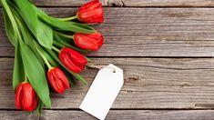 Kwiaty, Tulipany, Bilecik
