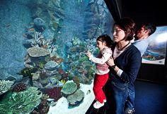 Family fun @Turkuazoo Akvaryum aquarium