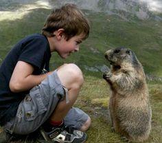 human & groundhog