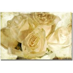 Trademark Fine Art White Rose's Canvas Wall Art by Lois Bryan, Size: 35 x 47, Multicolor