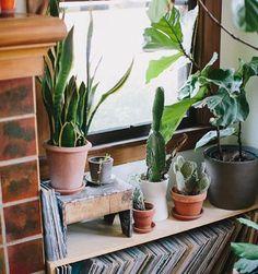 Urban jungle home deco met cactussen en LP's