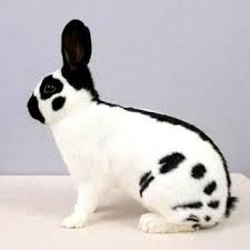 Картинки по запросу кролик рисунок English Spot Rabbit, Animals And Pets, Bunnies, Art, Bunny, Rabbits, Pets, Art Background, Kunst