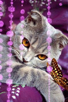 Katze mit Schmetterling - Animation Telefon №1331991