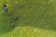 Yareta une plante qui vit plusieurs milliers d'années - 2Tout2Rien