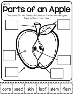 photo about Parts of an Apple Printable titled 94 Least difficult Concept Pursuits for Speech Remedy pics within 2019