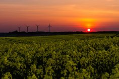 Sunset over field by Jens Stadsgaard on 500px