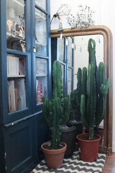 vintage mirror and cactus
