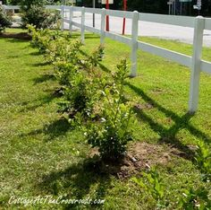 Step-By-Step Guide to Planting a Privacy Hedge