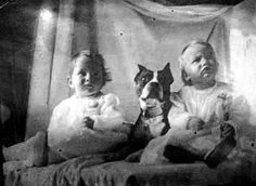 Pit bull - the nanny dog