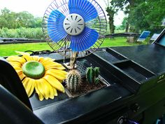 Cactus on vw dashboard