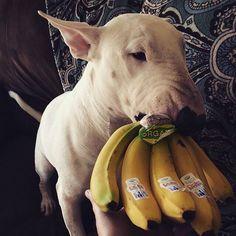 Banana Bullie