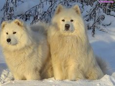 rasy psów - Google Търсене