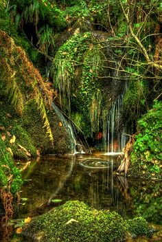 Magical Places: Gorgeous Photography by Juan Lois of La Coruña, Spain Forest Wallpaper, Fantasy Places, Beautiful Waterfalls, Science And Nature, Nature Pictures, Mother Nature, Mother Earth, Wonders Of The World, Places To See