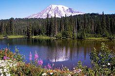 Mt. Rainier reflected in Reflection lake (Washington State)