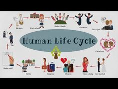 Learn English Vocabulary for Human Life Cycle with pictures. Human Life Cycle Vocabulary Be born - Her son Sean was born in Human Life Cycle, Cycle Of Life, Life Cycles, Esl Lessons, English Lessons, Learn English, Vocabulary Words, English Vocabulary, Personal Qualities