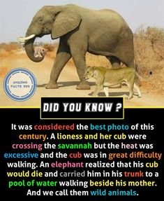 Double TAP for more amazing facts&knowledge . - TAG a friend to show this -TURN. True Interesting Facts, Some Amazing Facts, Interesting Facts About World, Intresting Facts, Unbelievable Facts, Amazing Science Facts, Awesome Facts, Wierd Facts, Wow Facts