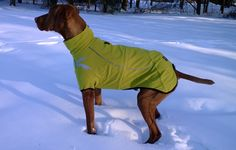 Chilly Dogs Fleece Dog Sweater The Chilly Sweater is the perfect fleece for cool fall and spring weather! Designed for - makes it nice to wear outdoors on chilly days (even mild winter days) Mastiff Dogs, Vizsla, Chilly Dogs, Waterproof Dog Coats, Dog Winter Coat, Dog Fleece, Dog Activities, Dog Jacket, Dog Sweaters