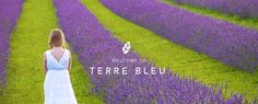 Terre Bleu - Lavendar farm is only an hours drive from Toronto in Milton