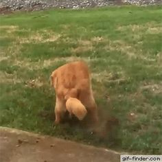 Dog gets busted   Gif Finder – Find and Share funny animated gifs