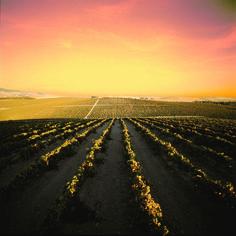 Ruta del Vino y el Brandy de #Jerez es toda una #experiencia que merece la pena vivir y compartir. Ahora puedes comprobarlo en nuestra nueva web! #turismo #enoturismo #sherry