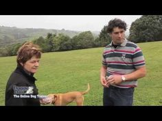 Interview with Doggy Dan - The Online Dog Trainer Puppy Training Schedule, Best Dog Training, New Puppy, Puppy Love, Pharaoh Hound, Dog Shock Collar, Dog Accessories, Best Dogs, Cute Dogs