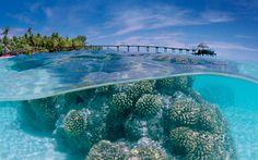 Le Barriere coralline sono in pericolo e la causa sono le creme solari - http://www.tecnoandroid.it/le-barriere-coralline-sono-in-pericolo-e-la-causa-sono-le-creme-solari/ - Tecnologia - Android