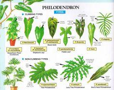 Tropical Garden, Tropical Plants, Cactus Plants, Air Plants, Succulent Planters, Green Garden, Succulents Garden, Hanging Planters, Common House Plants