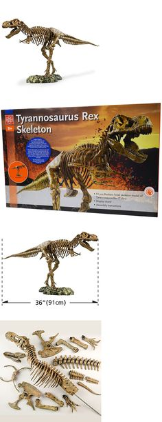 Animals and Nature 31744: Edu-Toys Science Tech T-Rex Skeleton 36 Scale Replica Model -> BUY IT NOW ONLY: $55.79 on eBay!