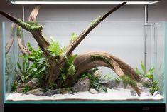 Stunning Driftwood In Open Top Aquarium With Rocks, Live Plants, & Sand Substrat. Stunning Driftwood In Open Top…MoreMore Aquarium Setup, Live Aquarium Plants, Nature Aquarium, Aquarium Design, Aquarium Fish Tank, Live Plants, Aquarium Sand, Discus Aquarium, Fish Aquariums