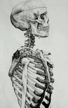 Skull study in pen on artboom