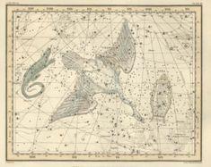 Vintage print, Stars, Astronomy, Constellation of the Cygnus, Lacerta, Lyra, 62
