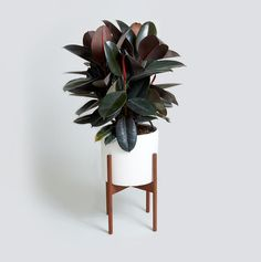 How to Choose a Plant for Every Room in Your House   A little bit of greenery can transform a space—and breathe new life into a room. It's one of the easiest ways to update your house without having to spend a fortune on new furniture or overpriced décor accents. But not all houseplants are created the same—and that means they all won't thrive in any old place. To choose a plant for a specific spot in your home, you'll want to keep two things in mind: plant care and your home's décor…